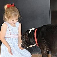 Adopt A Pet :: Roxy - Melbourne, FL