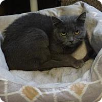 Adopt A Pet :: Raquel - West Des Moines, IA