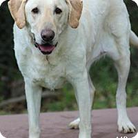 Adopt A Pet :: HEIDI - Tomball, TX