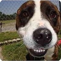 Adopt A Pet :: Les - Winter Haven, FL