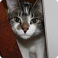 Adopt A Pet :: Nova (LE) - Little Falls, NJ