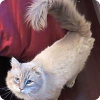Adopt A Pet :: Parisi - Davis, CA