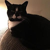 Adopt A Pet :: LOLA* - Trexlertown, PA