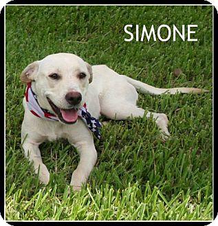 Labrador Retriever Mix Dog for adoption in Houston, Texas - Simone