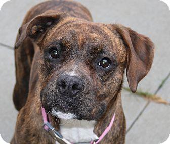 Boxer Mix Dog for adoption in Council Bluffs, Iowa - Allie