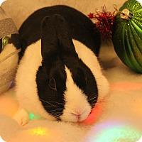 Adopt A Pet :: Grace - Hillside, NJ