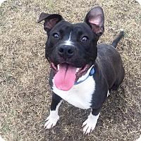 Adopt A Pet :: Bacchus - Baton Rouge, LA