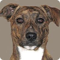 Adopt A Pet :: Winnie - Ruidoso, NM