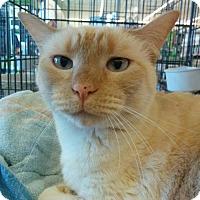 Adopt A Pet :: Numi - Hurst, TX