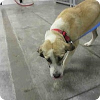 Adopt A Pet :: FIONA - Panama City, FL
