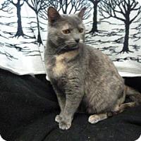 Adopt A Pet :: Autumn - South Haven, MI