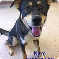 Adopt A Pet :: Nero - McDonough, GA