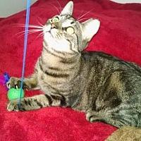 Adopt A Pet :: SHEBA - Bayside, NY
