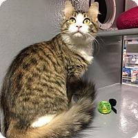 Adopt A Pet :: Sadie - Pasadena, TX