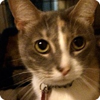 Adopt A Pet :: Tante Chloe - Dallas, TX