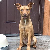 Adopt A Pet :: Mabel - Washington, DC