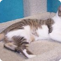 Adopt A Pet :: K-Vogl1-Jessica - Colorado Springs, CO