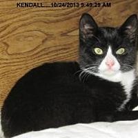 Adopt A Pet :: Kendall - Brainardsville, NY