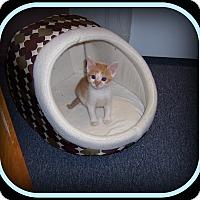 Adopt A Pet :: Butter - An Adorable Sweetie! - South Plainfield, NJ