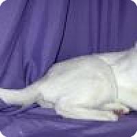Adopt A Pet :: Sammy - Powell, OH