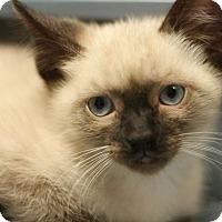 Adopt A Pet :: Sushi - Canoga Park, CA