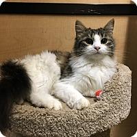 Adopt A Pet :: Brooke - Riverside, CA