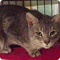 Adopt A Pet :: Hector - Brooklyn, NY