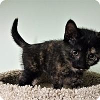 Adopt A Pet :: Lorie - Murphysboro, IL