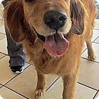 Adopt A Pet :: Jax - BIRMINGHAM, AL