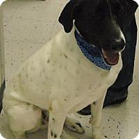 Adopt A Pet :: Tucker - Beaumont, TX