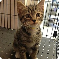 Adopt A Pet :: Bugsy - Winter Haven, FL
