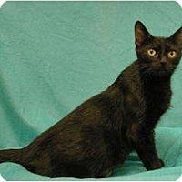 Adopt A Pet :: Treasure - Sacramento, CA
