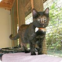 Adopt A Pet :: Dora - Dover, OH