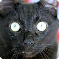 Adopt A Pet :: Mr. Bojangles - Chicago, IL