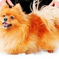 Adopt A Pet :: Buddy - Osseo, MN