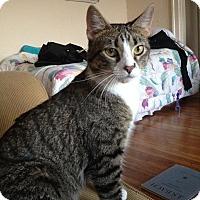 Adopt A Pet :: Olio - St. Louis, MO