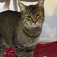 Adopt A Pet :: simon - Bourbonnais, IL