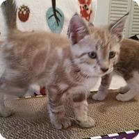 Adopt A Pet :: Fawn - Ocala, FL