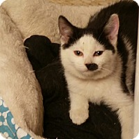 Adopt A Pet :: Mayflower - Medina, OH