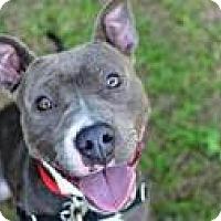 Adopt A Pet :: Sheba - METAIRIE, LA