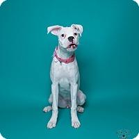 Adopt A Pet :: Esprit - Henderson, NV