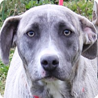 Adopt A Pet :: Bailey - Colonial Heights, VA