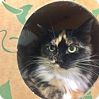 Adopt A Pet :: Shelby - Redwood City, CA