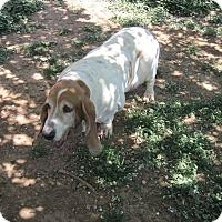 Adopt A Pet :: Maddie aka Madeline - Albuquerque, NM