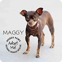 Adopt A Pet :: Maggy - Council Bluffs, IA