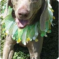 Adopt A Pet :: Lady **ADOPTED** - Eustis, FL