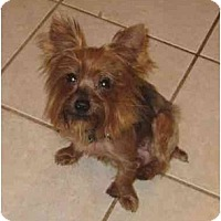 Adopt A Pet :: Lacy - Conroe, TX