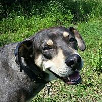 Adopt A Pet :: Woodsie - Van Alstyne, TX