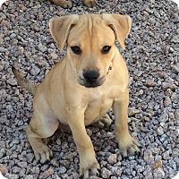 Adopt A Pet :: Luigi - Phoenix, AZ