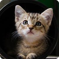 Adopt A Pet :: Mason - Irvine, CA